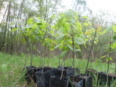 Another look at trees ready to plant