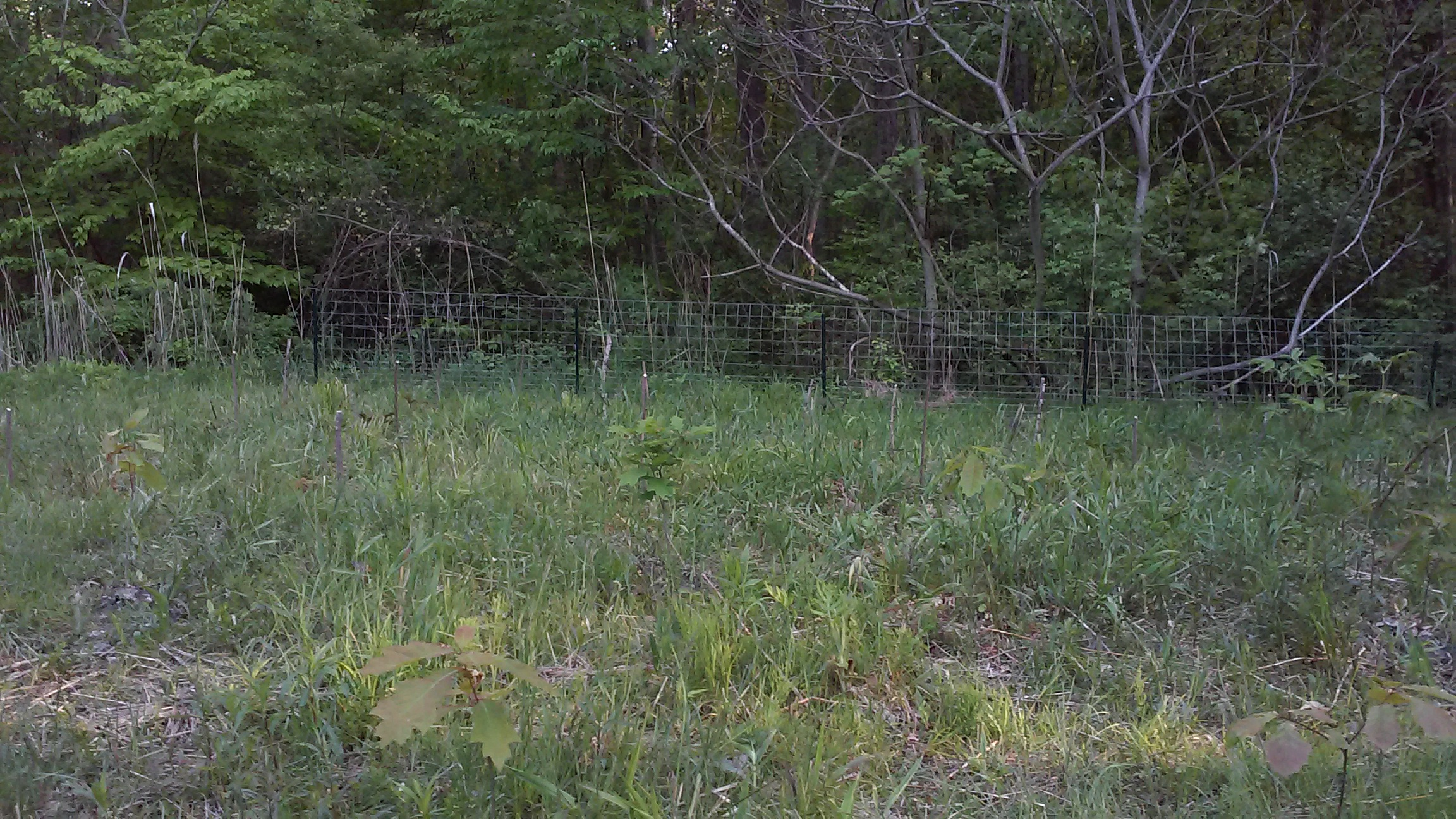 WREN tree nursery in Madison, OH